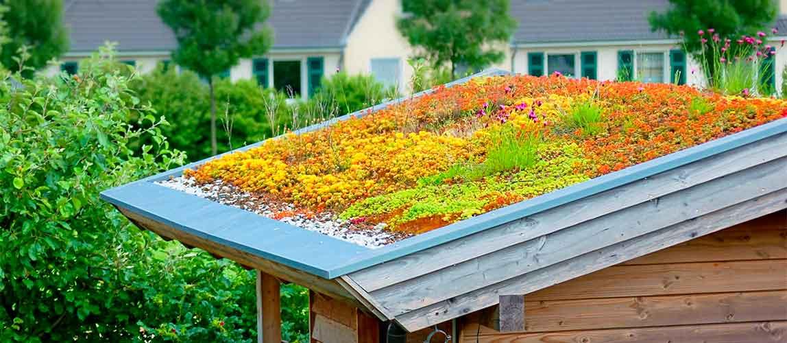 Le produit : substrat et rhizome de la toiture vegetalisee - Melting Pot